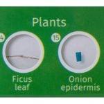 Комплект подготвени проби от живи същества и растения LabZZ CP24